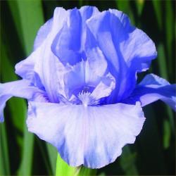 Nassau Blue